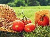 Lebensmittel bio und nachhaltig