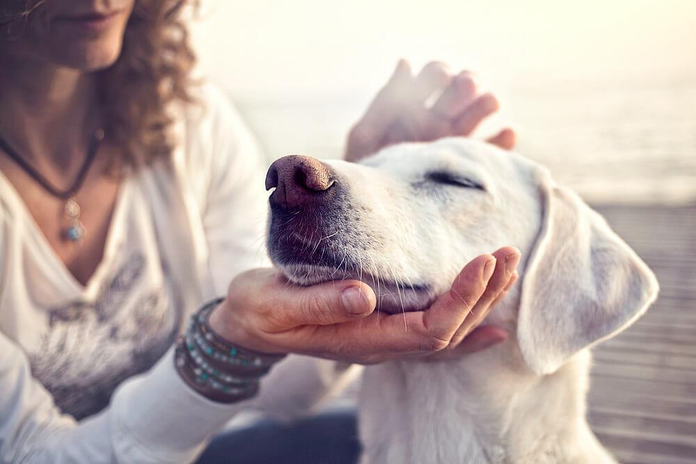 Therapeuten mit vier Pfoten - tiergestützte Therapie