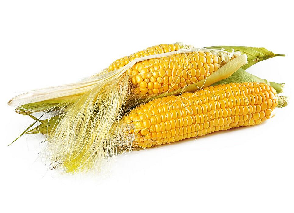 Alleskönner Mais - goldene Körner im Herbst